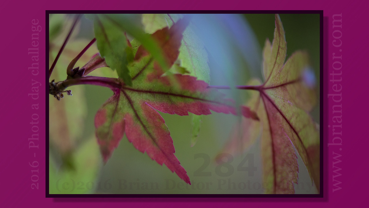 Day #284 - Fall Leaves