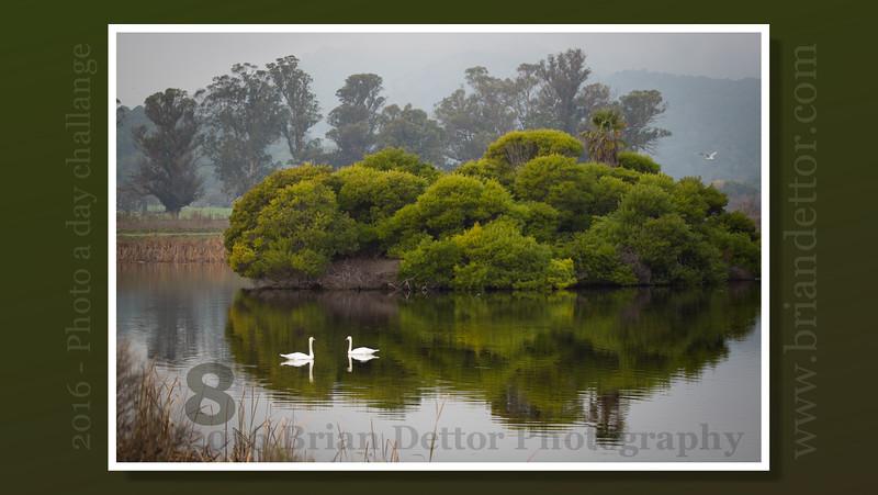 Day #8 - Las Gallinas Wildlife Ponds