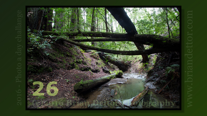 Day #26 - Larkspur Creek