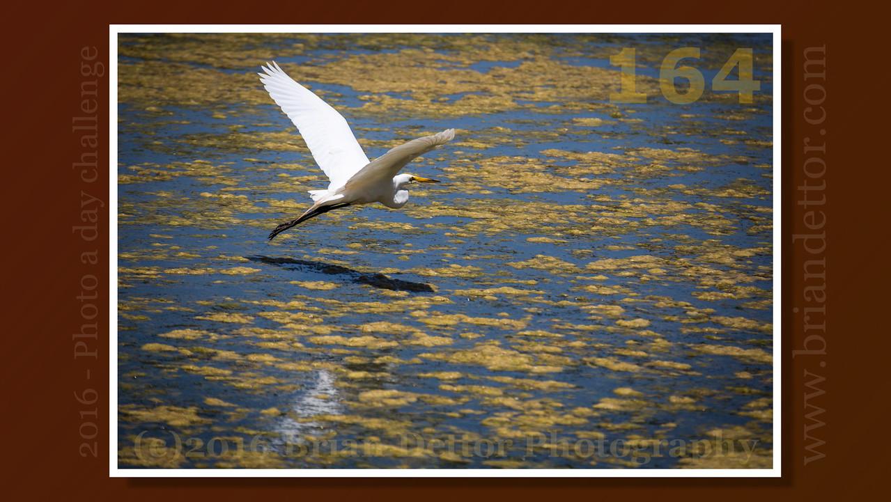 Day #164 - Heron at Scottsdale Pond