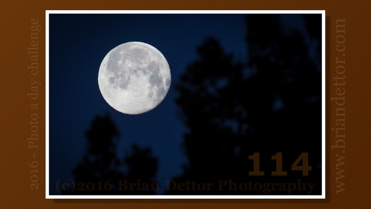 Day #114 - Morning Moon