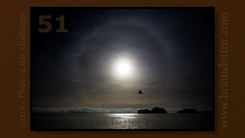 #51 - Sun Dog on San Rafael Bay