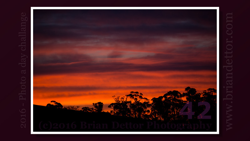 Day #42 - Sunrise
