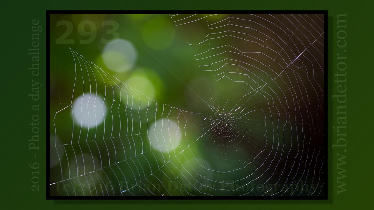 Day #293 - Spider Web (Carol's Garden)