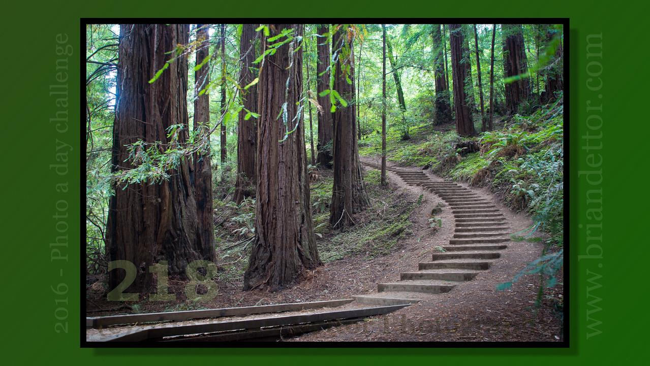 Day #218 - Muir Woods