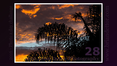 Day #23 - Sunrise Palm
