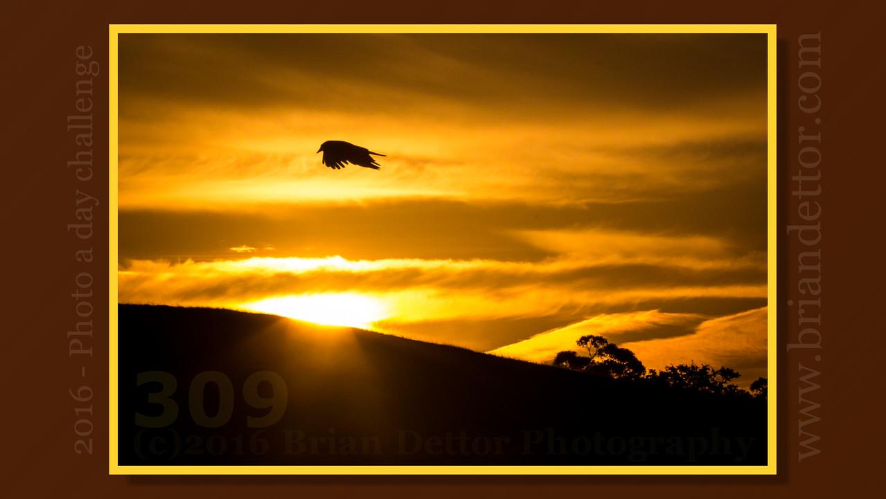 Day #309 - Sunrise Bird