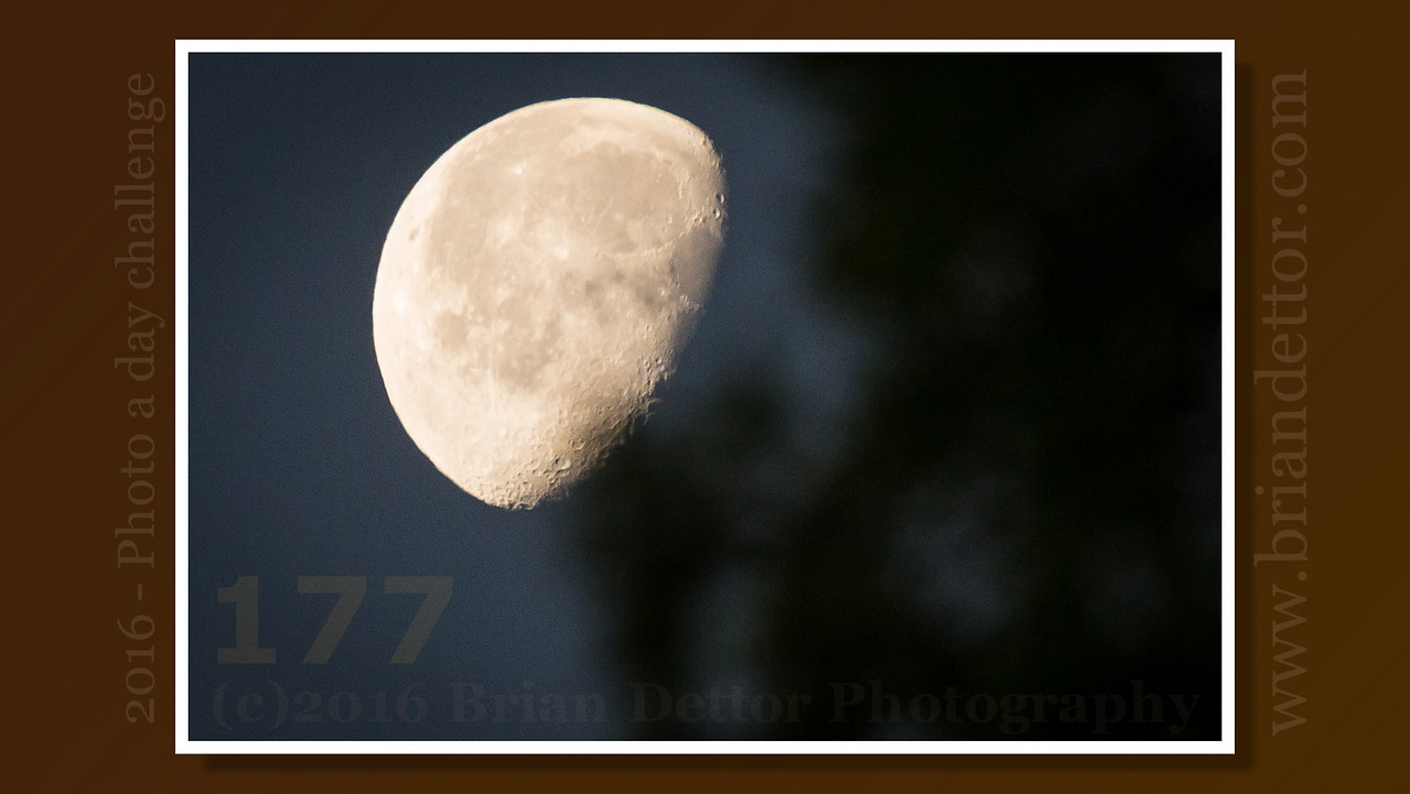 Day #177 - Morning Moon
