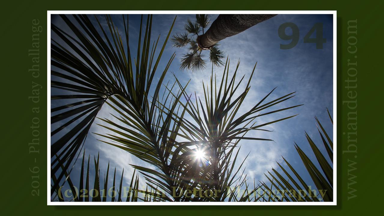 Day #94 - Marinwood Palms