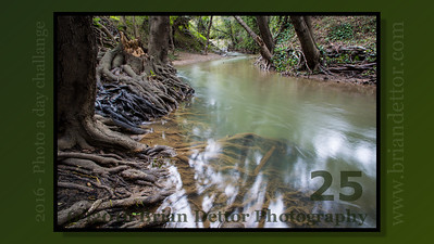 Day #25 - Miller Creek