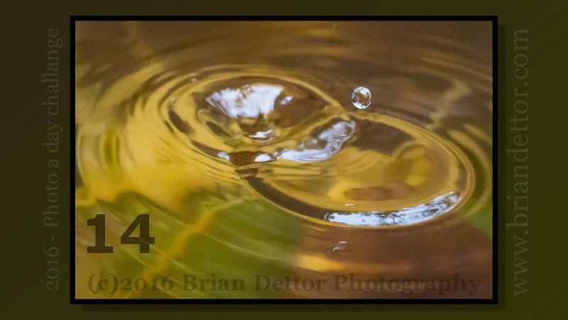 Day #14 - Pond Raindrop