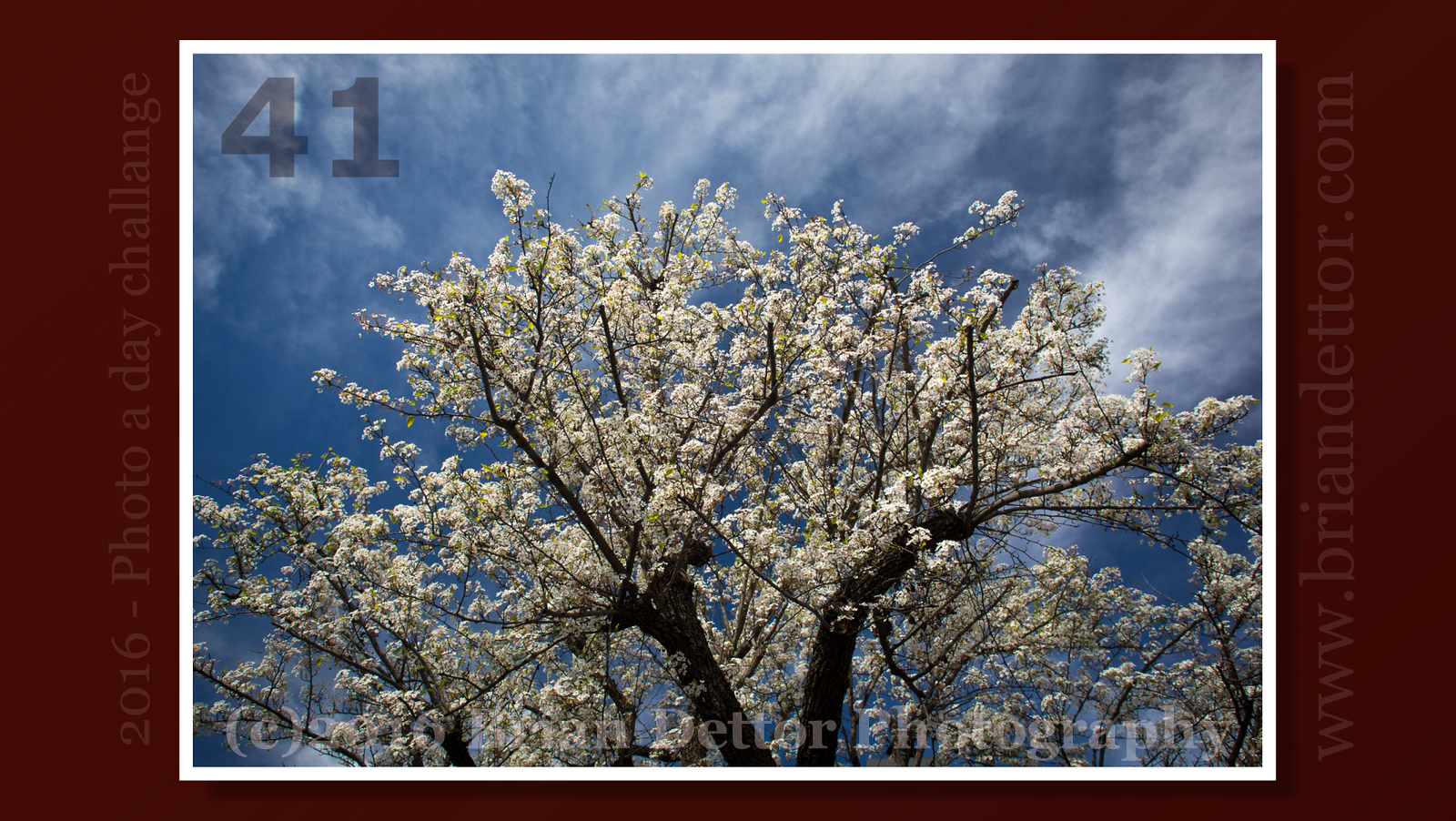 Day #41 - Spring Blossoms