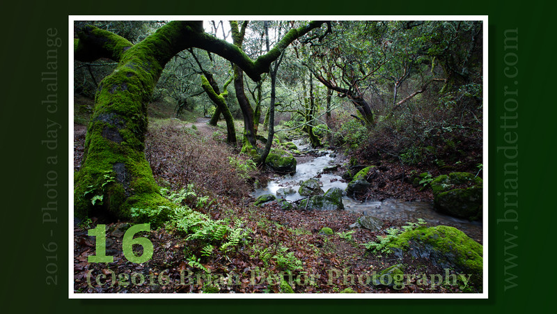 Day #16 - Arroyo de San Jose