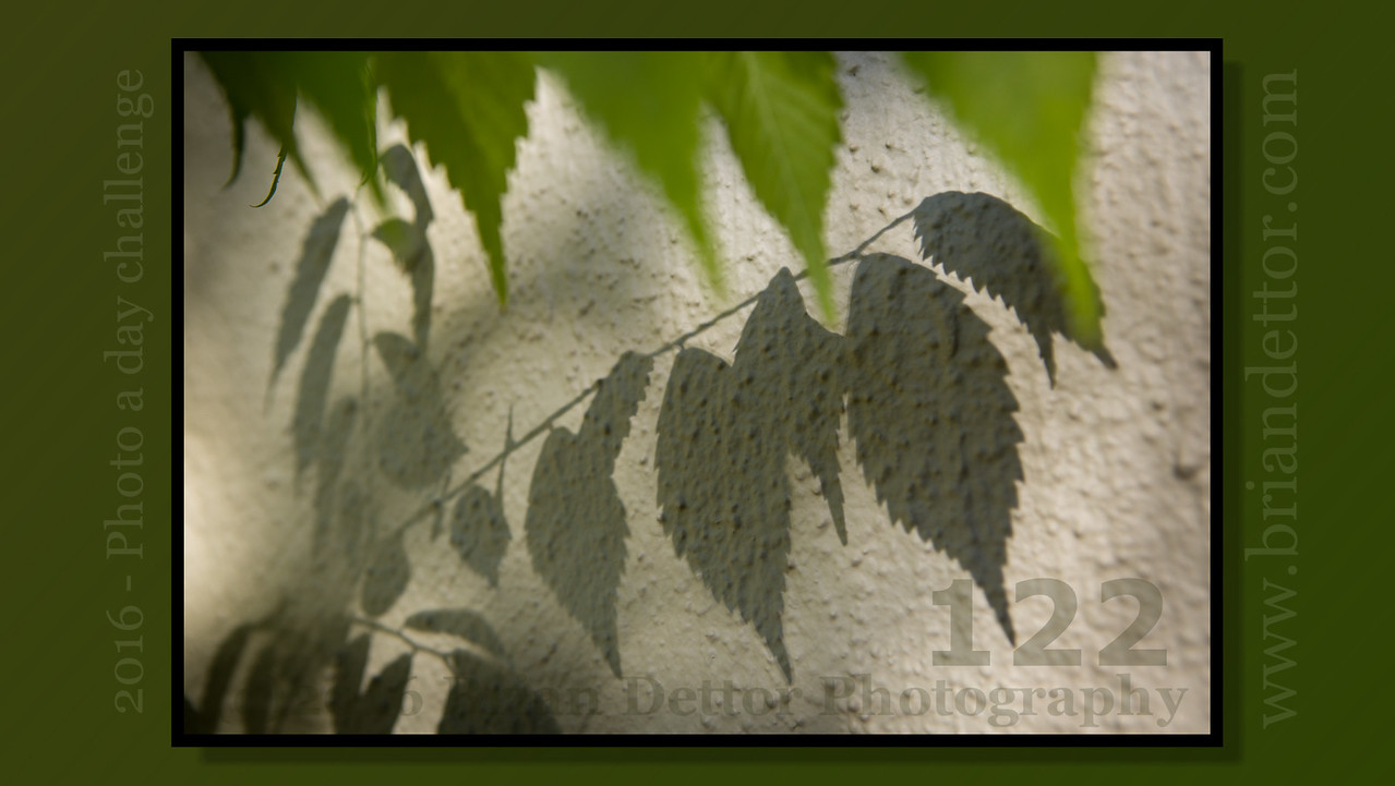 Day #122 - Leaves Shadow