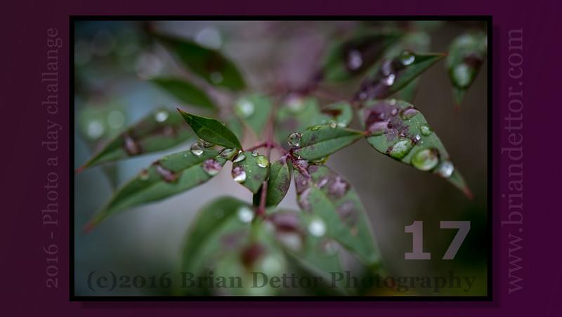 Day #17 - Rain Drops