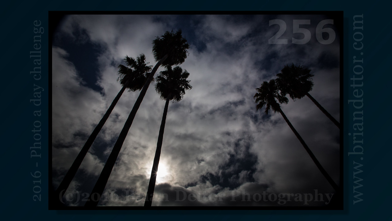 Day #256 - Palm Tree Silhouette