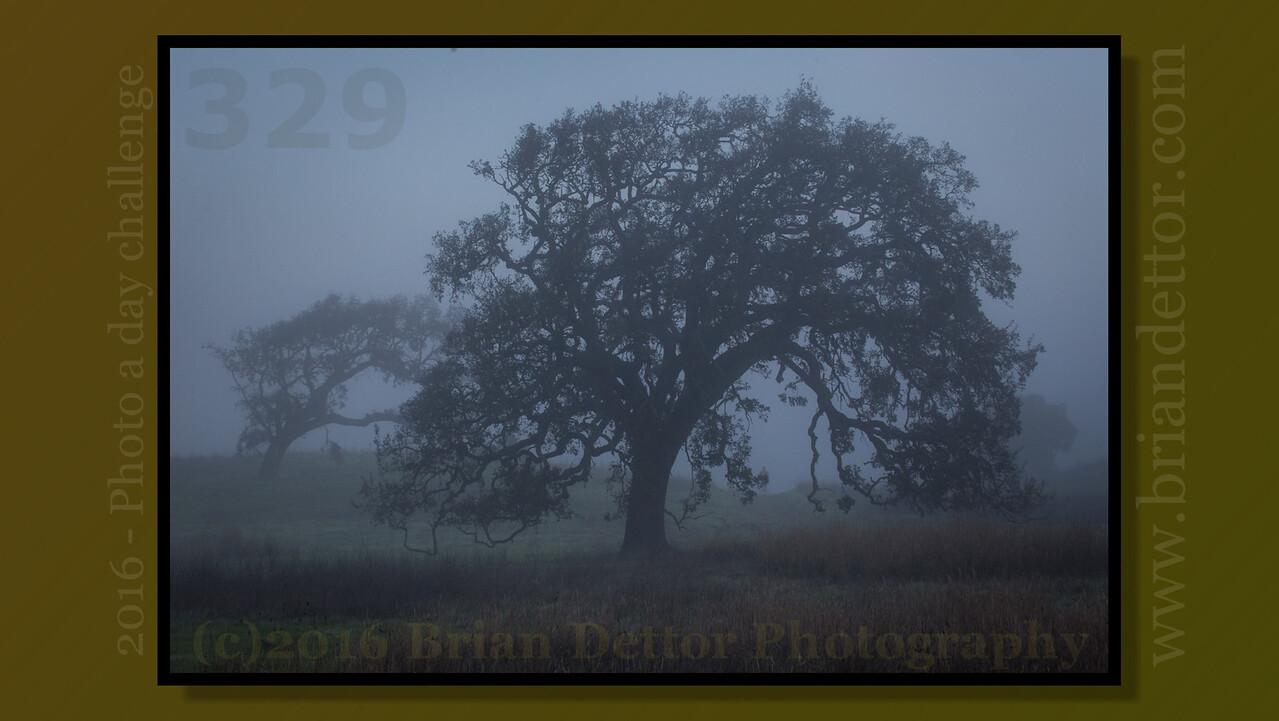 Day #329 - Foggy Oak
