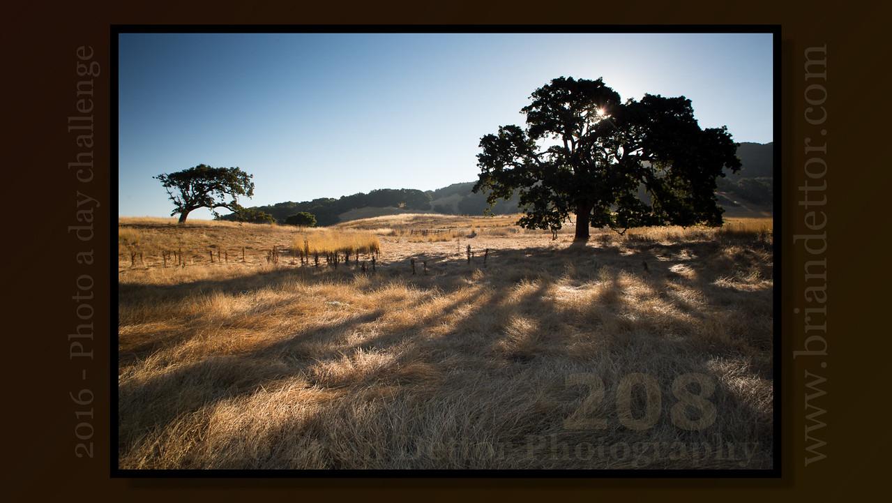 Day #208 - Rush Creek Oak Trees