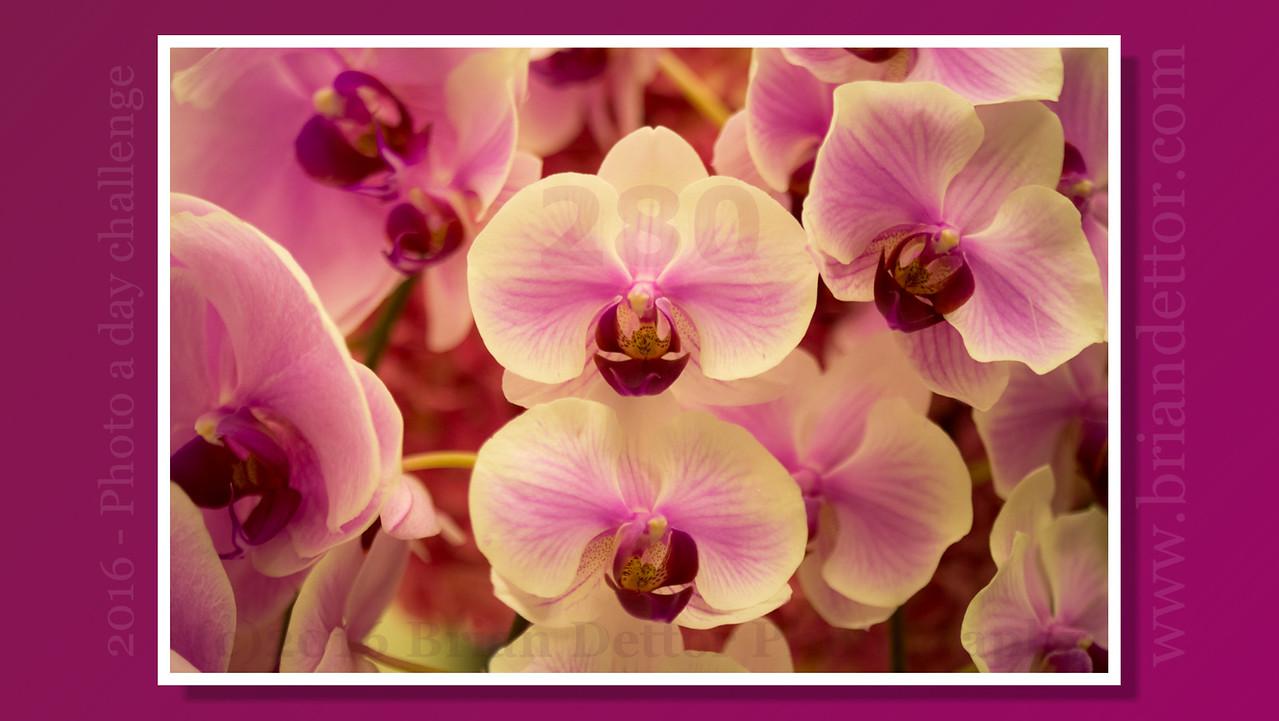#280 - Orchid's (Nikko Hotel)