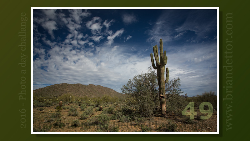 Day #49 - Sonoran Desert Saguaro