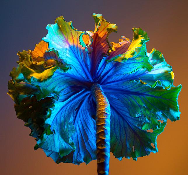 Colorful Kale