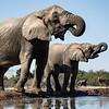 Brother Elephants