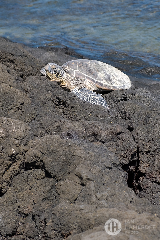 Sea Turtle on the Shore