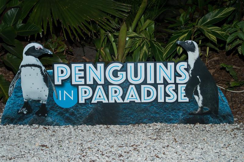Penguins CM-1