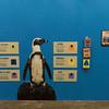 Penguins CM-11