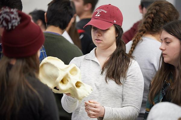 2018_UWL_Anthropology_Class_Skulls_0077