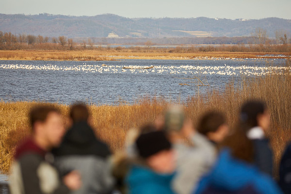 2017_Geography_Tundra_Swans_Brownsville_0050