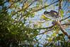 Costa Rica : Garza Pechicastaña , Chestnut-Belled Heron , Cipanci Wildlife Reserve , Guanacaste / Costa Rica : Vogel © Víctor Jaramillo/LATINPHOTO.org