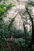 Costa Rica : Rain Forest , Arenal , San Carlos  , Costa Rica / Costa Rica : Urwald Arenal in San Carlos © Víctor Jaramillo/LATINPHOTO.org