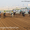 Horse Racing,Jebel Ali, Dubai, United Arab Emirates