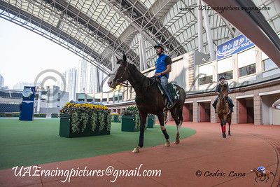 Hong Kong HKIR Wednesday Trackwork