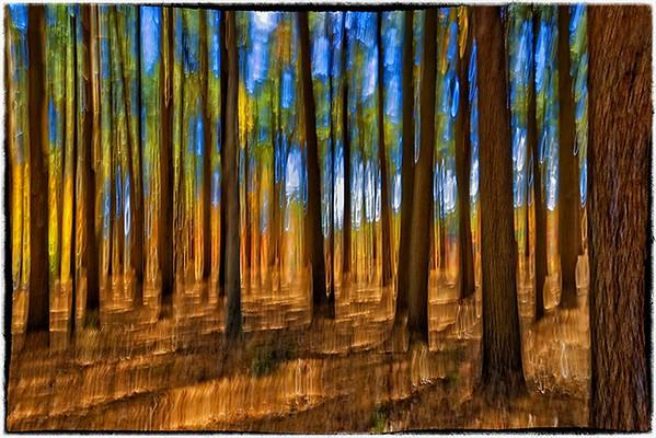 Tree Blur - Gary Emord - PSA 6 Points