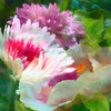 My Garden - Lane Lewis - PSA 6 Points