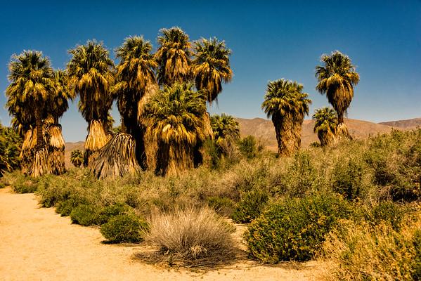 Coachella Valley Preserve - Thousand Palms Oasis Preserve (McCallum Trail) in California