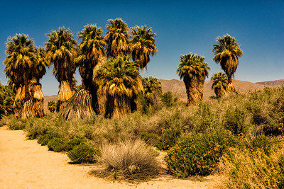 Coachella Valley Preserve - Thousand Palms Oasis Preserve (McCallum Trail) in California