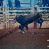 1-20-2018 Sundance Rodeo (Bull Riding Short-Go) (95 of 98)