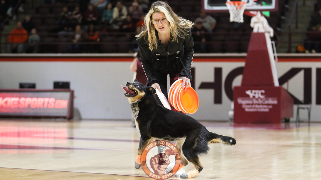 """The """"Mutts Gone Nuts"""" act performs for the crowd for the halftime show. (Mark Umansky/TheKeyPlay.com)"""