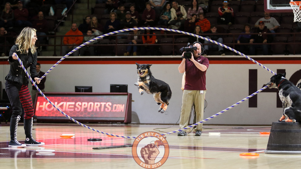 A dog jumps rope while his handler and a pair of other dogs hold each end during the halftime show finale. (Mark Umansky/TheKeyPlay.com)