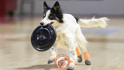 A dog carries a frisbee during the halftime show. (Mark Umansky/TheKeyPlay.com)