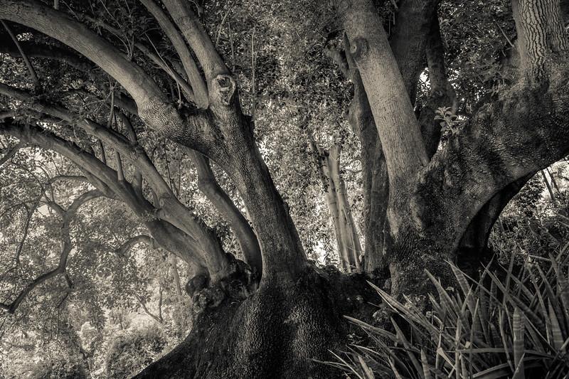 Lush Landscape 1
