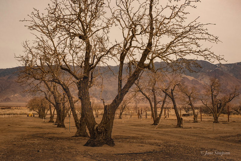 The Orchard (Manzanar means Orchard)