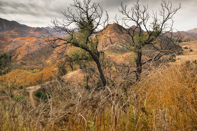 Oaks and Goat Buttes, Looking West, October