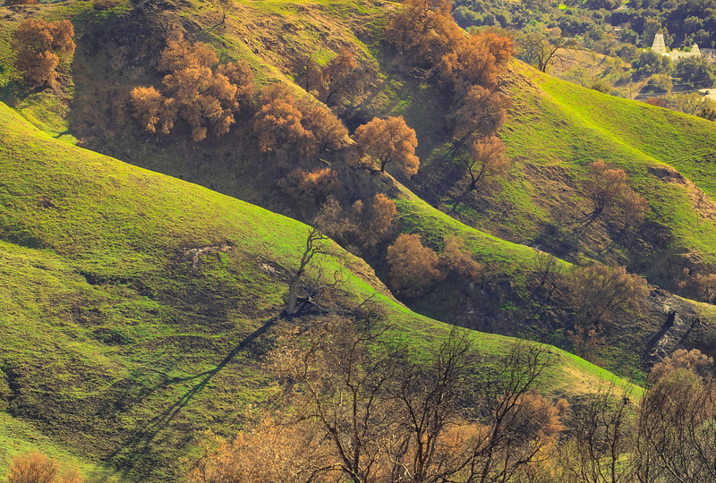 Hillsides Carpeted in Annual Grasses
