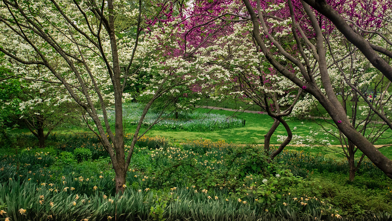 Spring Blooms in Central Park, NYC