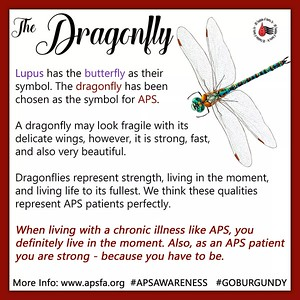 APS Awareness Month ~ Day 14: If you've ever been wondering why the dragonfly was chosen as the official symbol (or #mascot) of #APS, today's graphic will explain! The #dragonfly, although delicate looking, is strong and fast. It represents living in the moment and living every day to its fullest. We believe this is the PERFECT symbol to represent APS patients!! What do you think? Please share today's graphic along with the hashtags #GOBURGUNDY and #APSAWARENESS on all your social media accounts! Please come back tomorrow for a new graphic! — thinking about dragonflies.