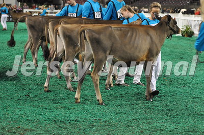 Junior Calves